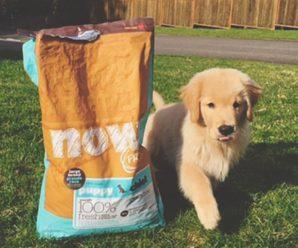 Обзор канадского корма для собак Now