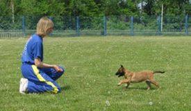 Как научить щенка команде ко мне