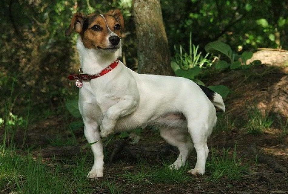 Порода собак из фильма Маска
