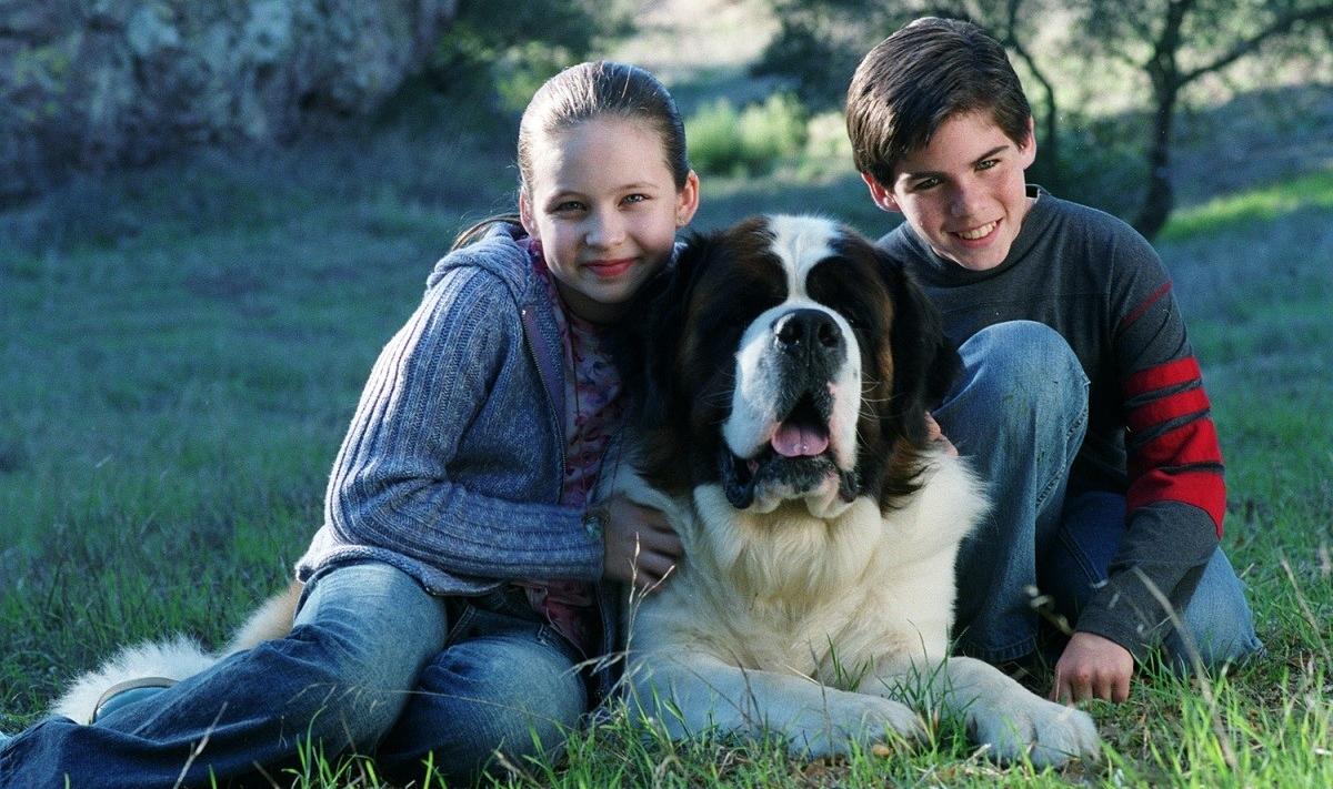 Собака из фильма Бетховен