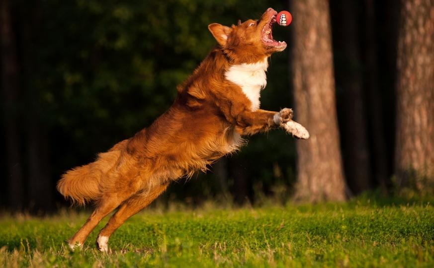 Собака из фильма пять минут тишины