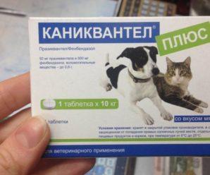 Каниквантел плюс для собак (таблетки) – надежный препарат при борьбе с гельминтами