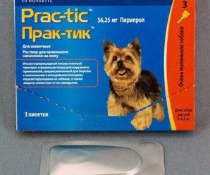 Практик капли для собак — эффективное средство от блох, вшей и клещей