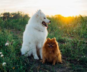 Пушистые породы собак: обширный список с описаниями и фотографиями