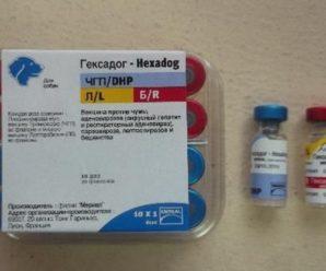 Вакцина для собак Гексадог: общие сведения, характеристика препарата, отзывы