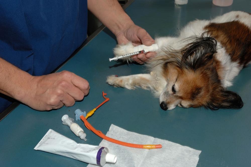 У собаки берут кровь