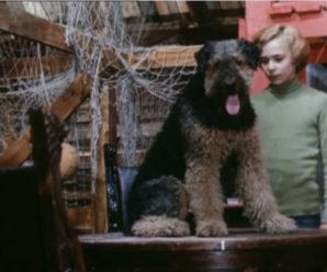 Порода собаки из фильма «Электроник»: кто такая Рэсси