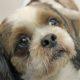 Сопли у собаки — обыкновенная простуда, или признак серьезного заболевания