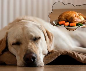 Какие продукты не должны есть наши собаки