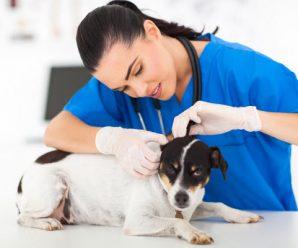 Как приучить собаку к визитам к ветеринару?