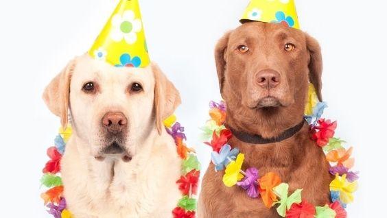 Собачий возраст на человеческий – таблица, периоды жизни питомца