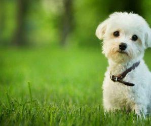 Лучшие глистогонные препараты для собак