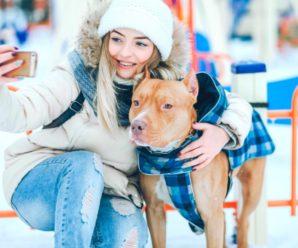 Как выбрать зимний комбинезон для собаки