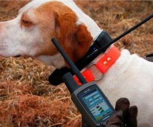 Как отучить собаку лаять без причины: виды и принцип работы ошейников антилай