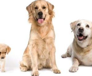 Как соотнести возраст собаки и человека: формулы расчета жизни питомца