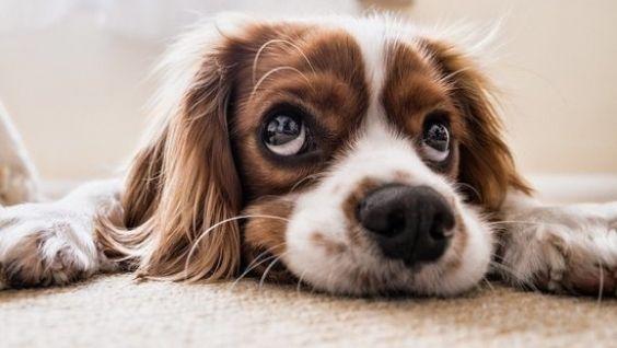 Температура собаки в норме и как измерить самостоятельно