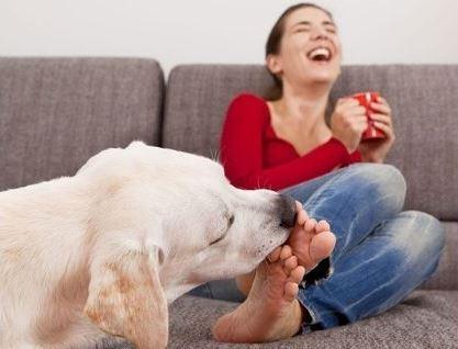 Почему собака вылизывает хозяина