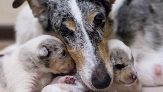 На какой день открываются глаза у щенков