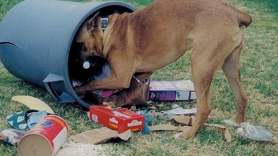 Собака отравилась, что делать в домашних условиях