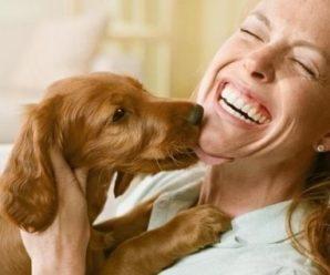 Основные причины, почему собака вылизывает хозяина и способы отучения от данной привычки