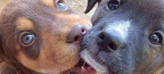 Как отличить щенка мальчика от девочки по внешнему виду